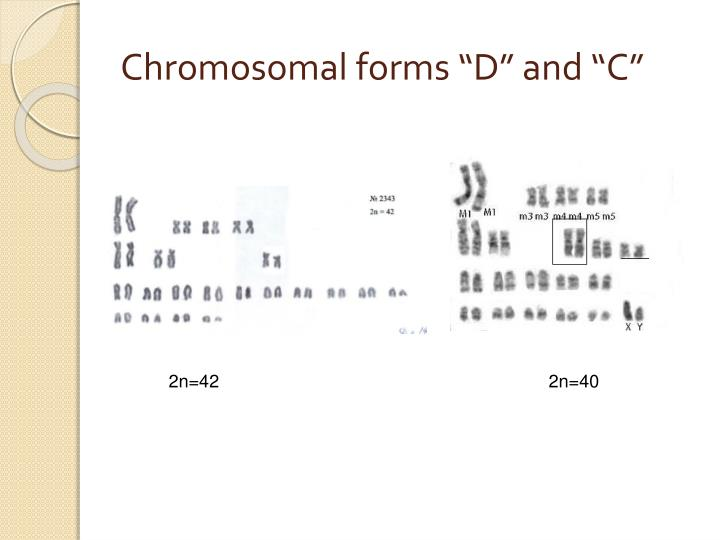 "Chromosomal forms ""D"" and ""C"""