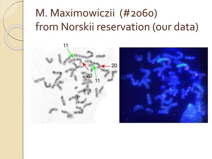 M. Maximowiczii  (#2060)