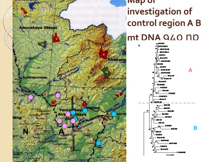 Map of investigation of control region A B