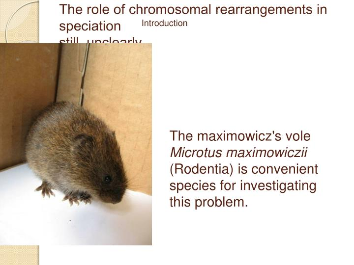 The role of chromosomal rearrangements in speciation still unclearly