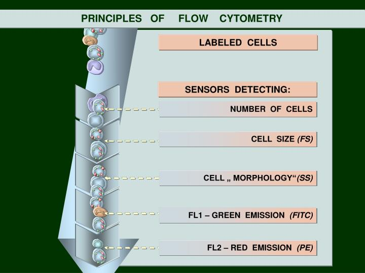 PRINCIPLES   OF     FLOW    CYTOMETRY