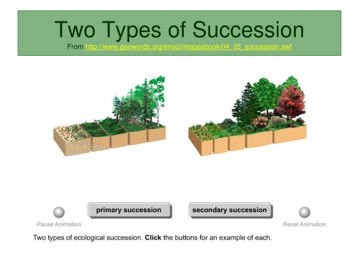 Two Types of Succession