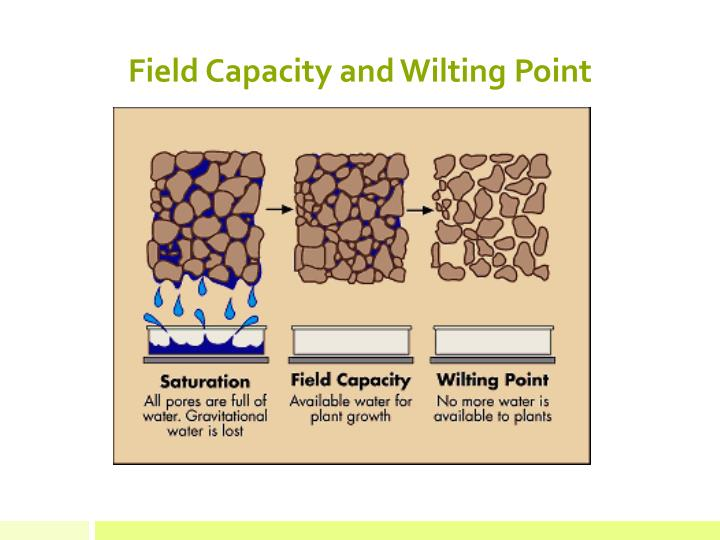 Field Capacity and Wilting Point