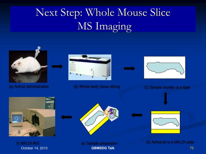 Next Step: Whole Mouse Slice