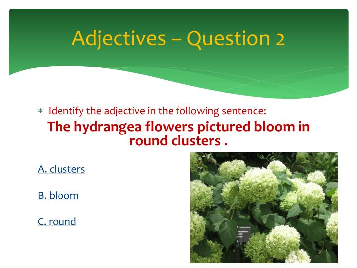 Adjectives – Question 2