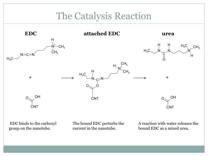 The Catalysis Reaction