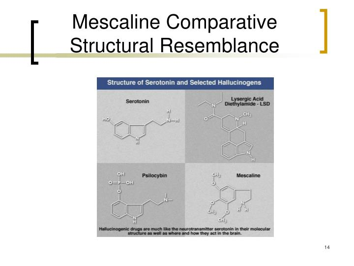 Mescaline Comparative Structural Resemblance