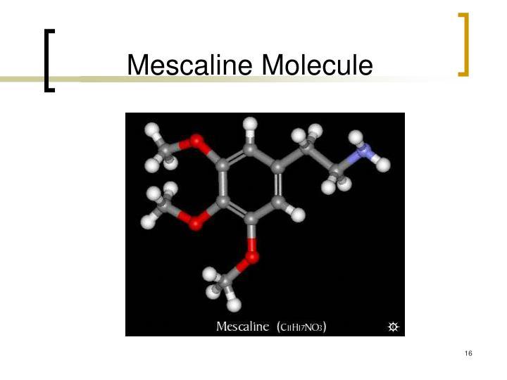 Mescaline Molecule
