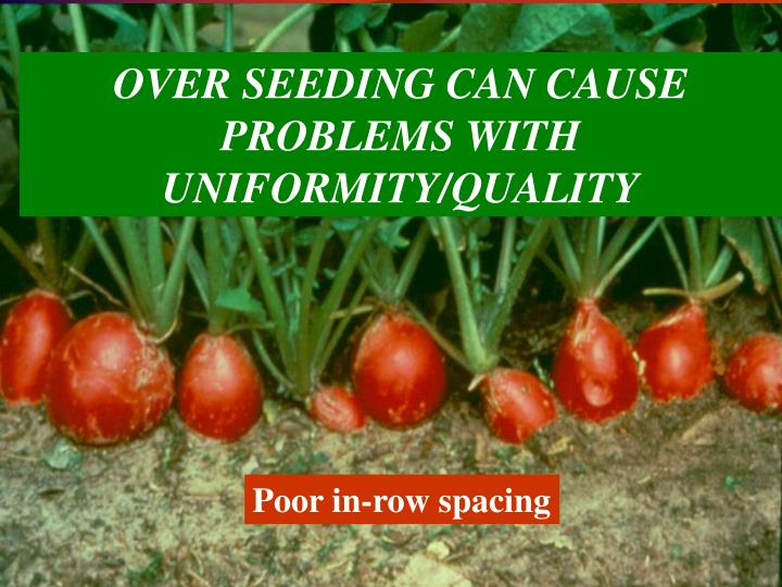 OVER SEEDING CAN CAUSE PROBLEMS WITH UNIFORMITY/QUALITY