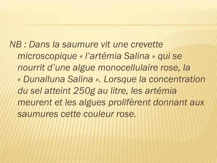 NB: Dans la saumure vit une crevette microscopique «l'artémia Salina» qui se nourrit d'une algue monocellulaire rose, la «