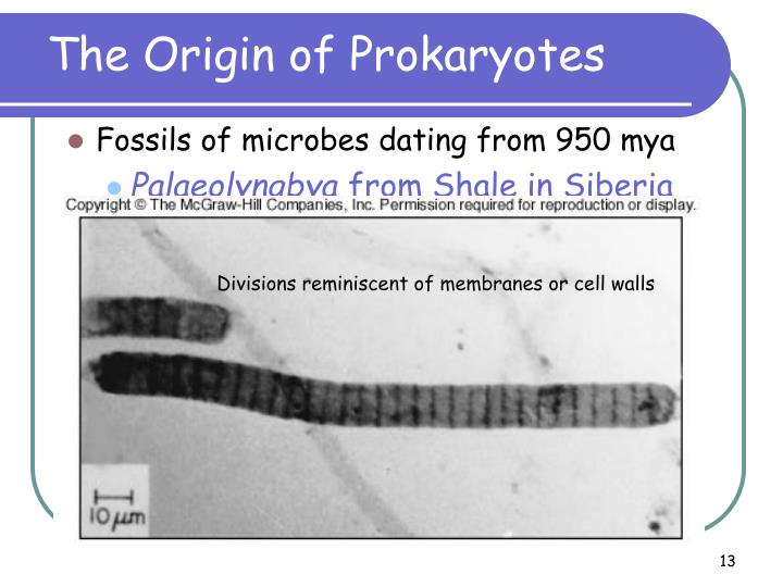 The Origin of Prokaryotes