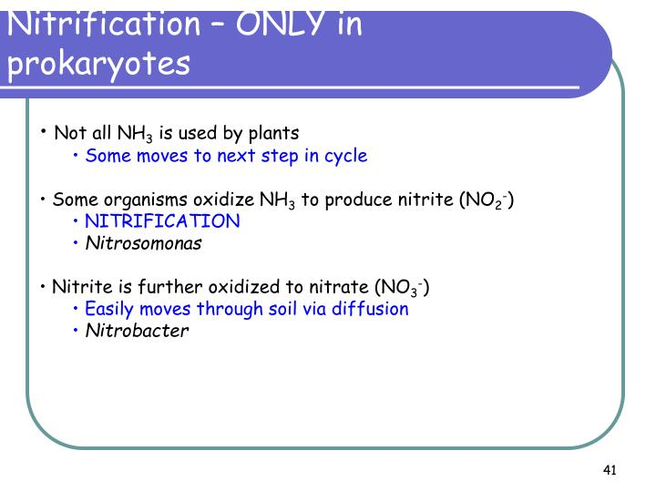 Nitrification – ONLY in
