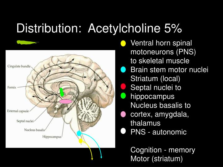 Distribution:  Acetylcholine 5%