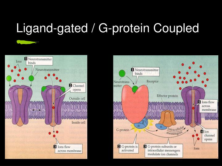 Ligand-gated / G-protein Coupled