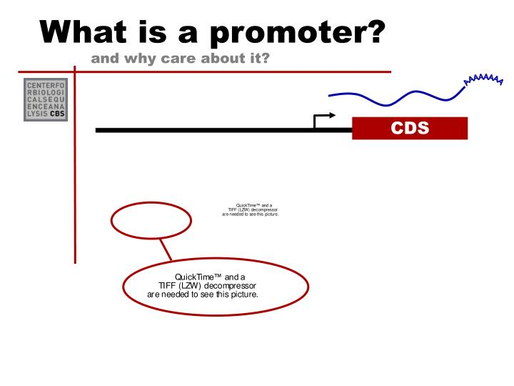 What is a promoter?