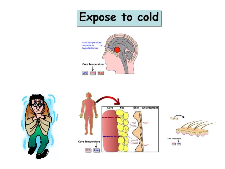 Expose to cold