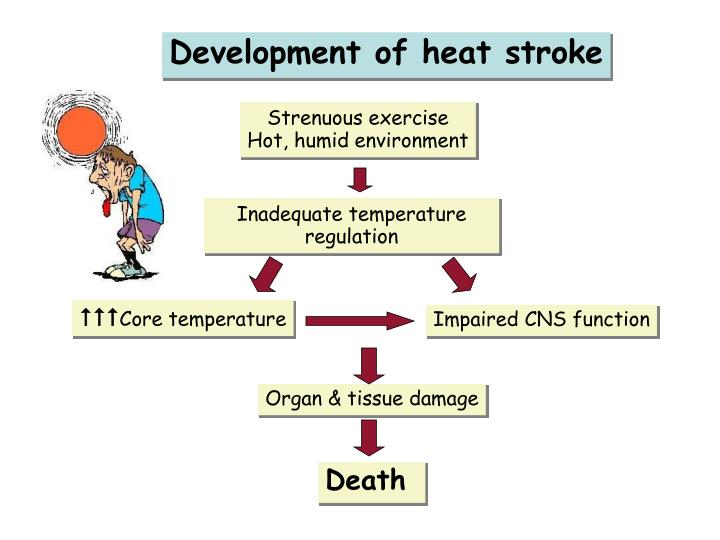 Development of heat stroke