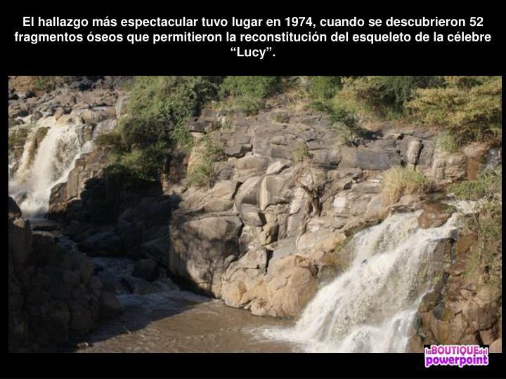 """El hallazgo más espectacular tuvo lugar en 1974, cuando se descubrieron 52 fragmentos óseos que permitieron la reconstitución del esqueleto de la célebre """"Lucy""""."""