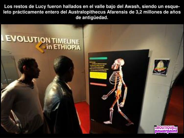 Los restos de Lucy fueron hallados en el valle bajo del Awash, siendo un esque-leto prácticamente entero del Australopithecus Afarensis de 3,2 millones de años de antigüedad.