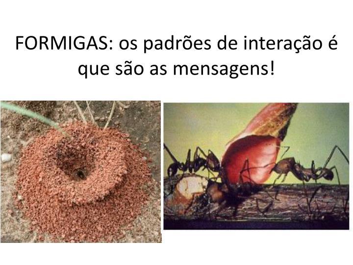 FORMIGAS: