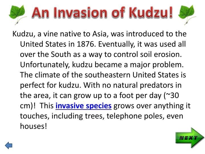 An Invasion of Kudzu!