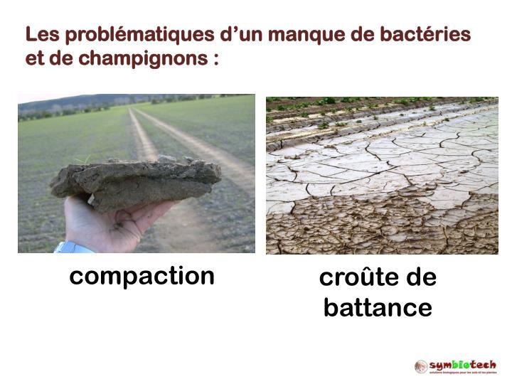 Les problématiques d'un manque de bactéries et de champignons :