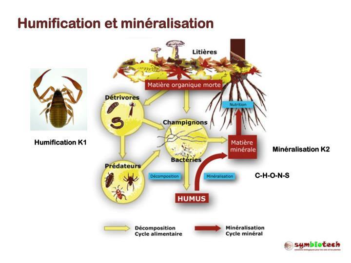 Humification et minéralisation