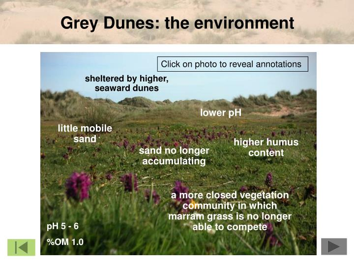 Grey Dunes: the environment