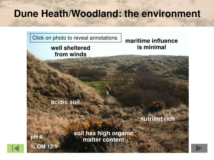 Dune Heath/Woodland: the environment