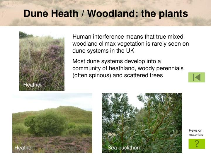 Dune Heath / Woodland: the plants