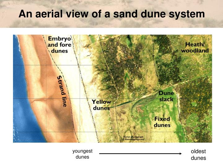 An aerial view of a sand dune system