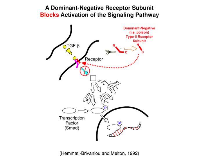 A Dominant-Negative Receptor Subunit