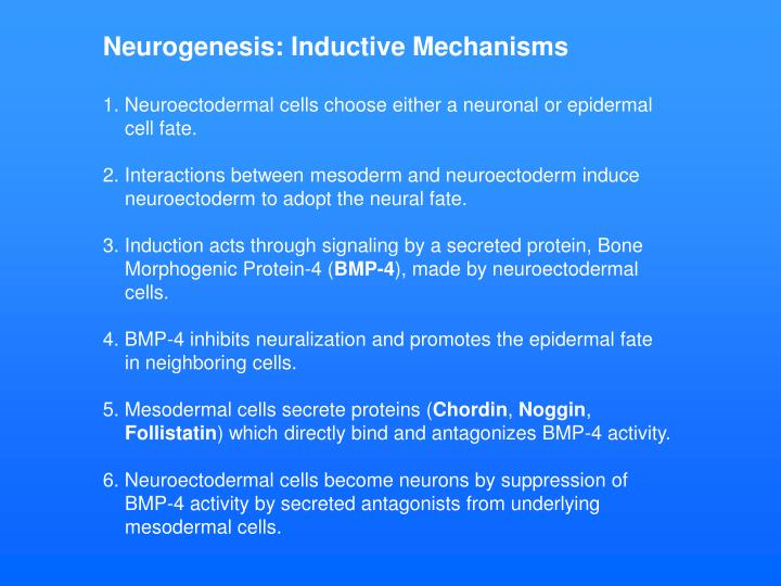 Neurogenesis: Inductive Mechanisms