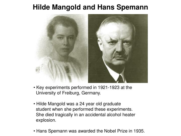 Hilde Mangold and Hans Spemann