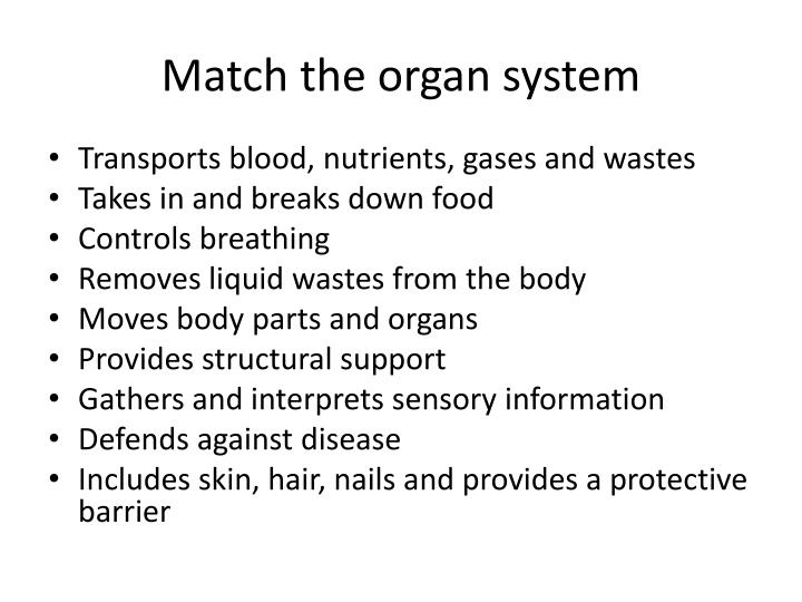 Match the organ system