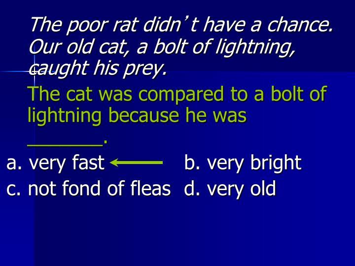 The poor rat didn