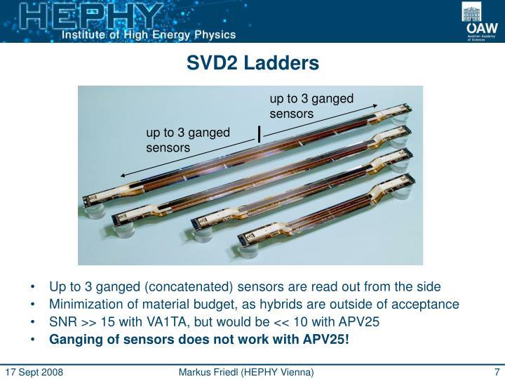 SVD2 Ladders