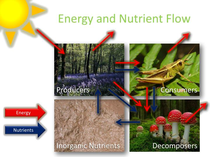 Energy and Nutrient Flow
