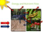 energy and nutrient flow1