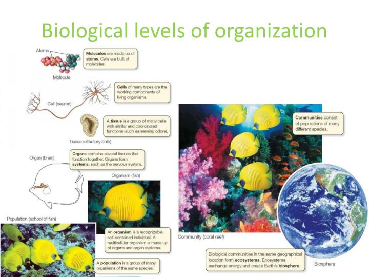 Biological levels of organization