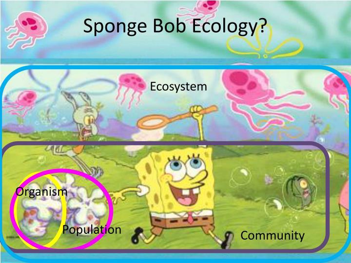 Sponge Bob Ecology?