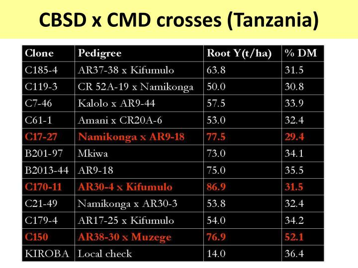 CBSD x CMD crosses (Tanzania)
