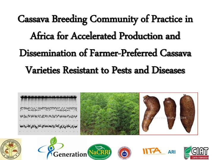 Cassava Breeding Community of