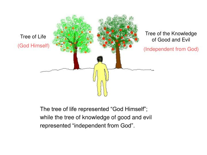Basic principles of the bible two trees