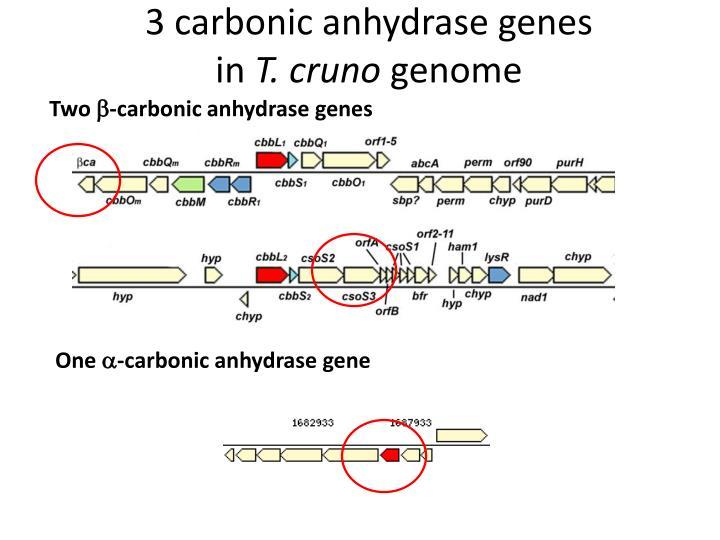 3 carbonic