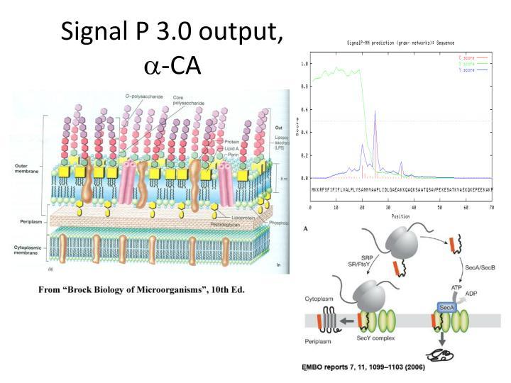 Signal P 3.0 output,
