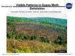 visible patterns in gypsy moth defoliation