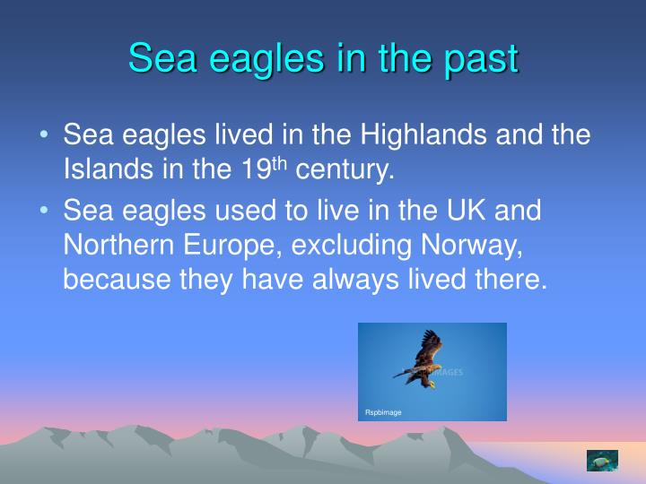 Sea eagles in the past