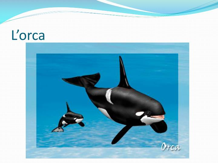 L'orca
