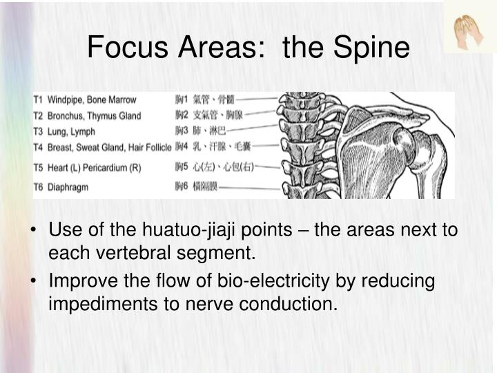 Focus Areas:  the Spine